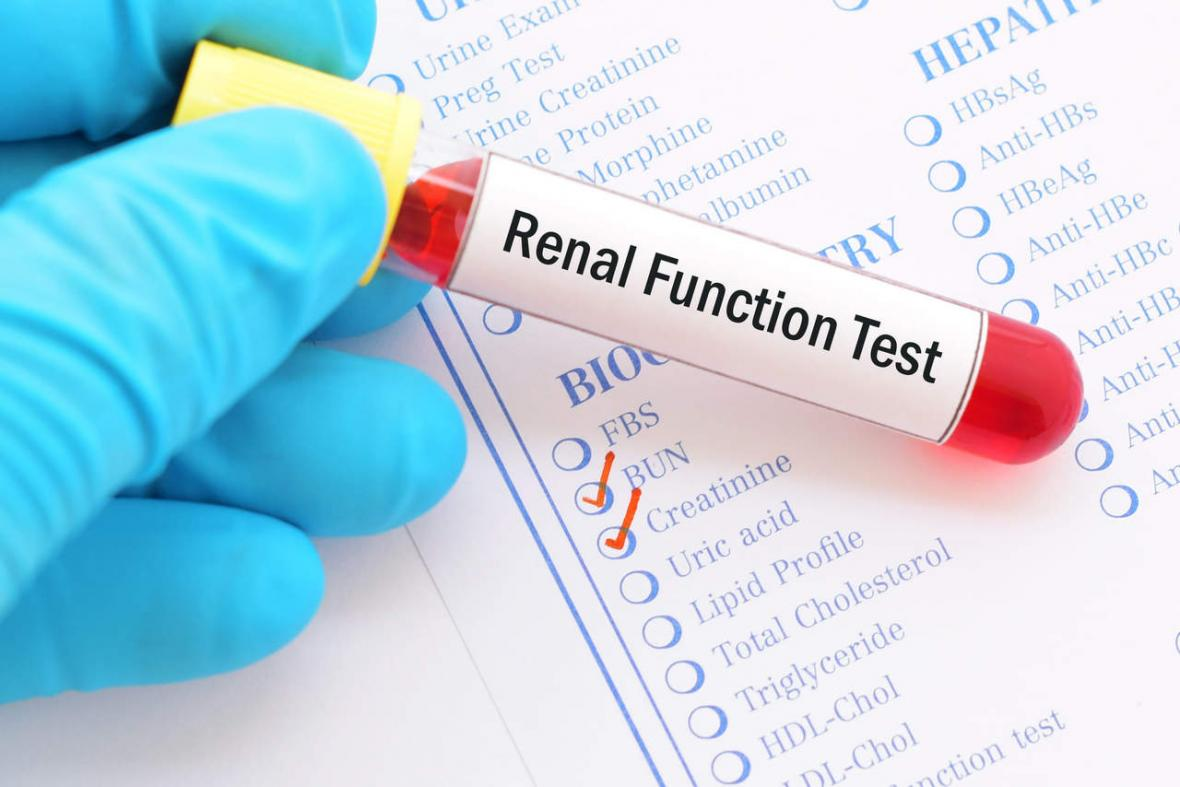 Renal function of the kidney
